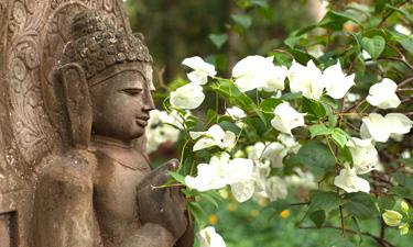Gartenanlage AyurSoma Resort Kerala